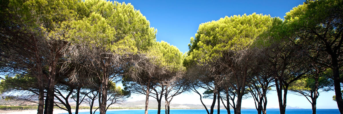 The Pinewoods of Porto Pino Hotel Cala Dei Pini